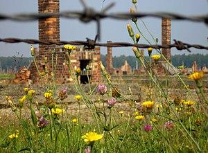 Auschwitz-Birkenau, im Vordergrund blühende Bl...