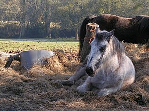 English: Lazy Sunday aftenoon Horse chilling o...