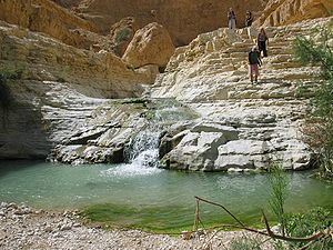 Arugot Stream, the Judean Desert, Israel.
