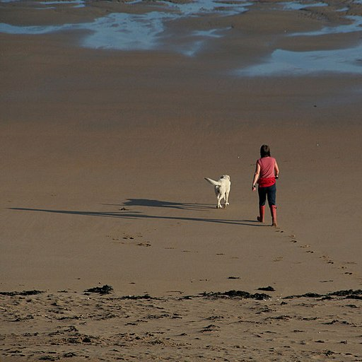 Walking the Dog - geograph.org.uk - 1563377 summer activities that involve animals