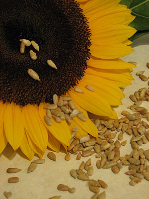 Sunflower and seeds