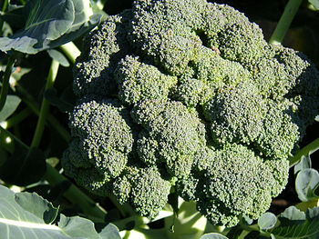 English: Broccoli Deutsch: Broccoli