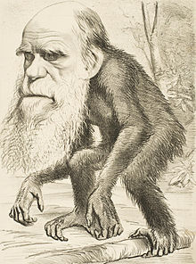 1871 image of a monkey with Charles Darwin's head