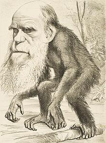 Caricatura de Darwin de su época en la que se burlaban del hecho de que el hombre procediera de otro primate.