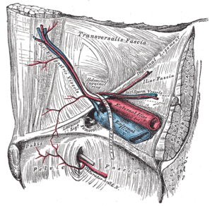 The relations of the femoral and abdominal ing...