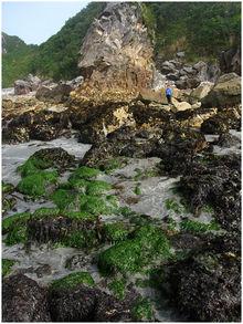 Harris Beach State Park - Wikipedia
