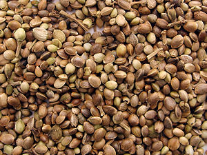 Marijuana seeds.