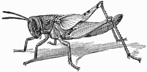 Marching locusts – sped up 6-fold. When the de...