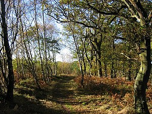 English: Saltoun Big Wood. One of the largest ...