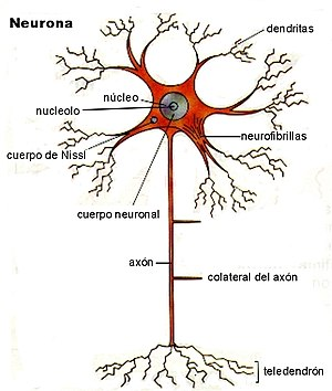 Neurona