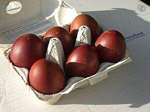 English: Marans eggs Français : Oeufs de poule...