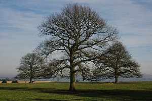 English: Nature's Symmetry Three trees in a fi...