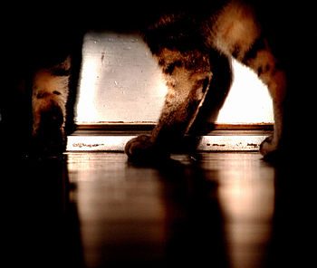 A cat pacing in the darkened hallway. Always l...