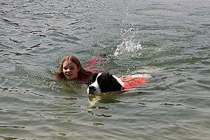 Deutsch: Wasserarbeit, hier Teamschwimmen Hund...