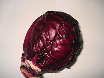 English: Cabbage