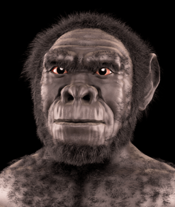 Homo habilis - forensic facial reconstruction
