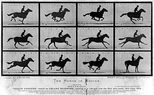 The Horse in Motion by Eadweard Muybridge.