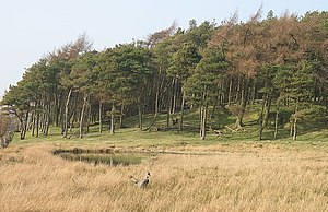 English: Marshland, Cant Hills A marsh and poo...