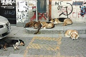 Straßenhunde (Palermo)