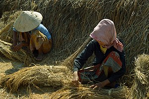 English: Rice farming in Cambodia