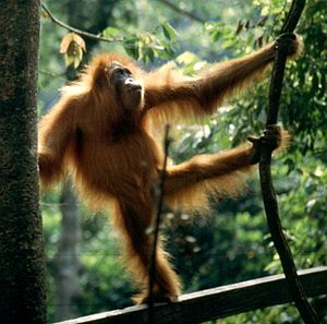 English: dave 59 took it myself at the Orang r...