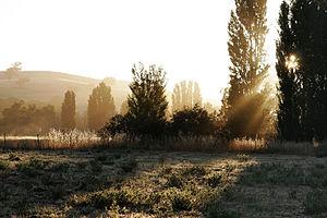 Sunlight through trees at dawn