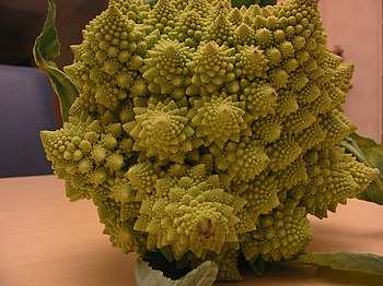 English: Fractal form of a Romanesco broccoli