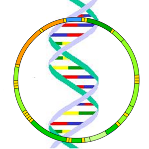 Logo for mitochondrial DNA