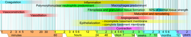 Time chart of the sequence of events in wound healing, on a logarithmic scale.