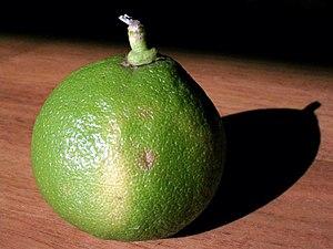 English: A bergamot orange from Calabria, Ital...