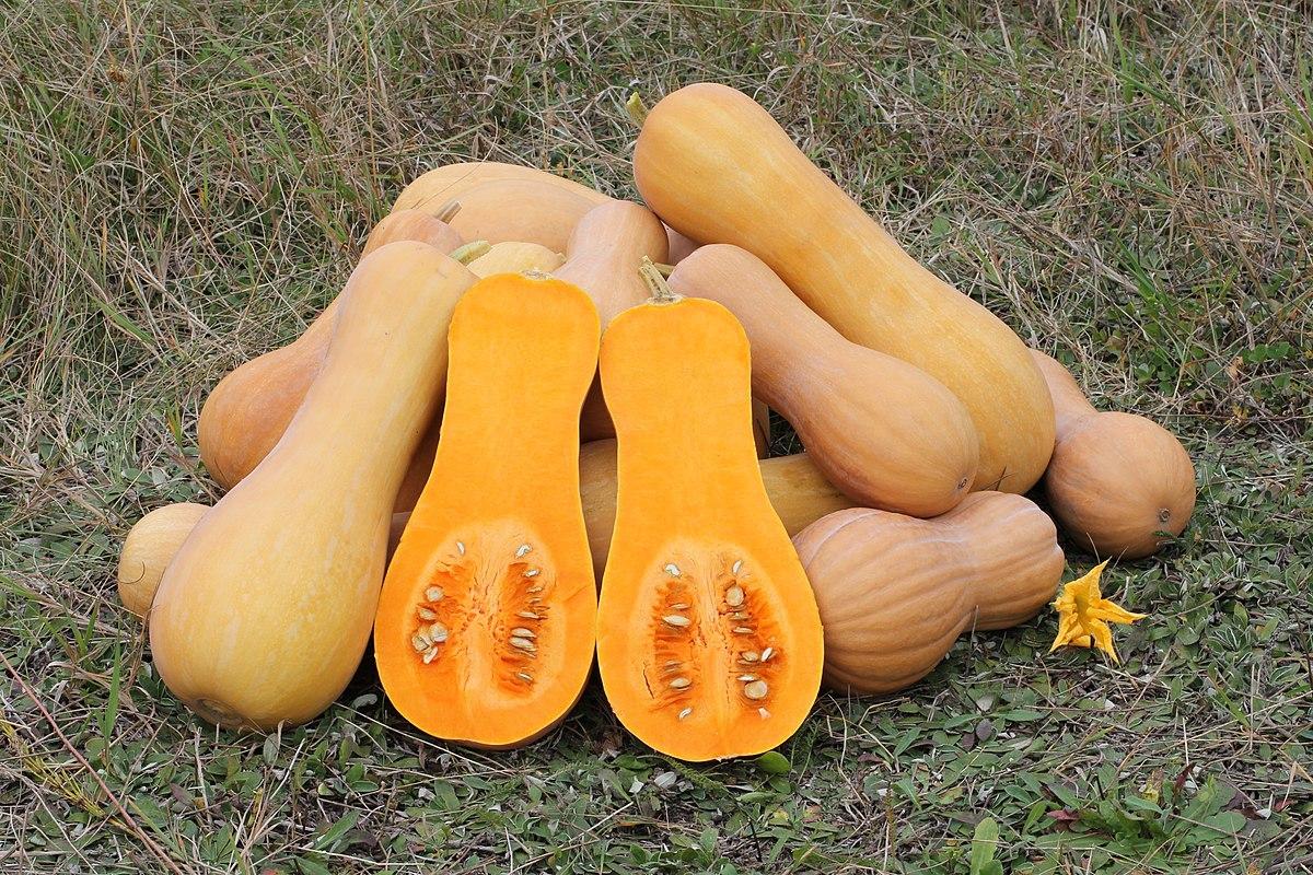 Banana Squash Varieties