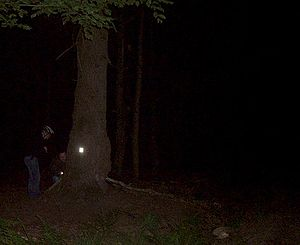 English: Night geocache. Only in darkness refl...