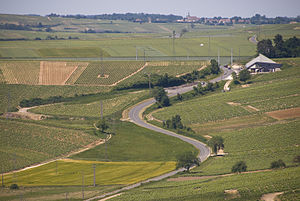 Vineyards in the French wine region of Sancerr...