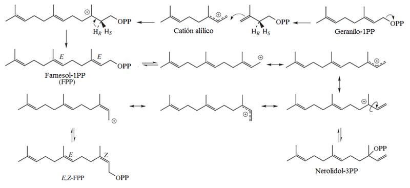 Biosintesis de triprenoles.png