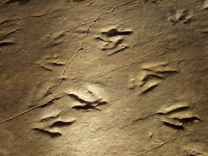 File:Dinosaur State Park (Rocky Hill, CT) - close-up.JPG