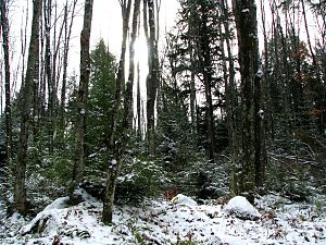 English: November snow in the Nicolet National...