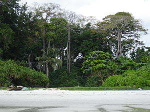 Beach no' 7, Havelock Island, Andaman Islands,...