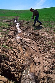 Severe soil erosion in a wheat field near Washington State University, USA.