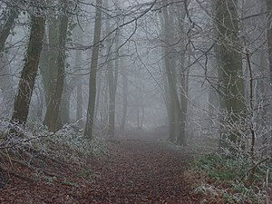 Howe Wood in fog A non-public footpath leading...