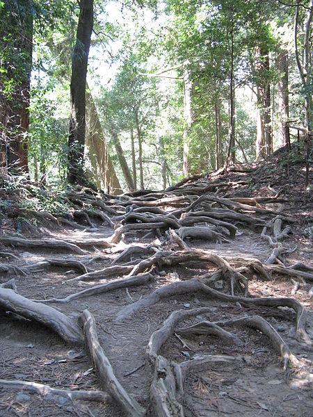 File:Kurama-dera kinonemichi.jpg