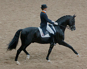 Dressage - Edward Gal and Gribaldi, Trakehner ...