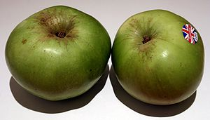 English: Bramley Apple from Nottinghamshire Po...