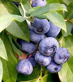 English: Blueberries.