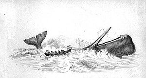 Hunting of Sperm whale