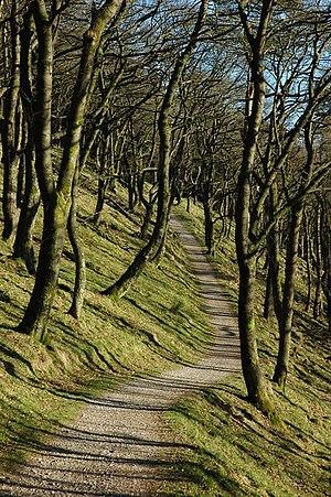 Broadleaved woods in Macclesfield Forest
