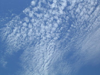 Layer of cirrocumulus stratiformis clouds