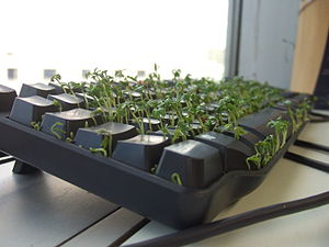 Cress growing in a keyboard.