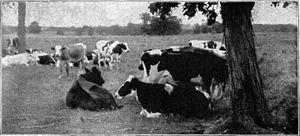 NSRW Dairy Industry 1