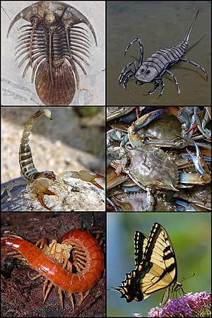 English: Arthropoda collage. From left to righ...