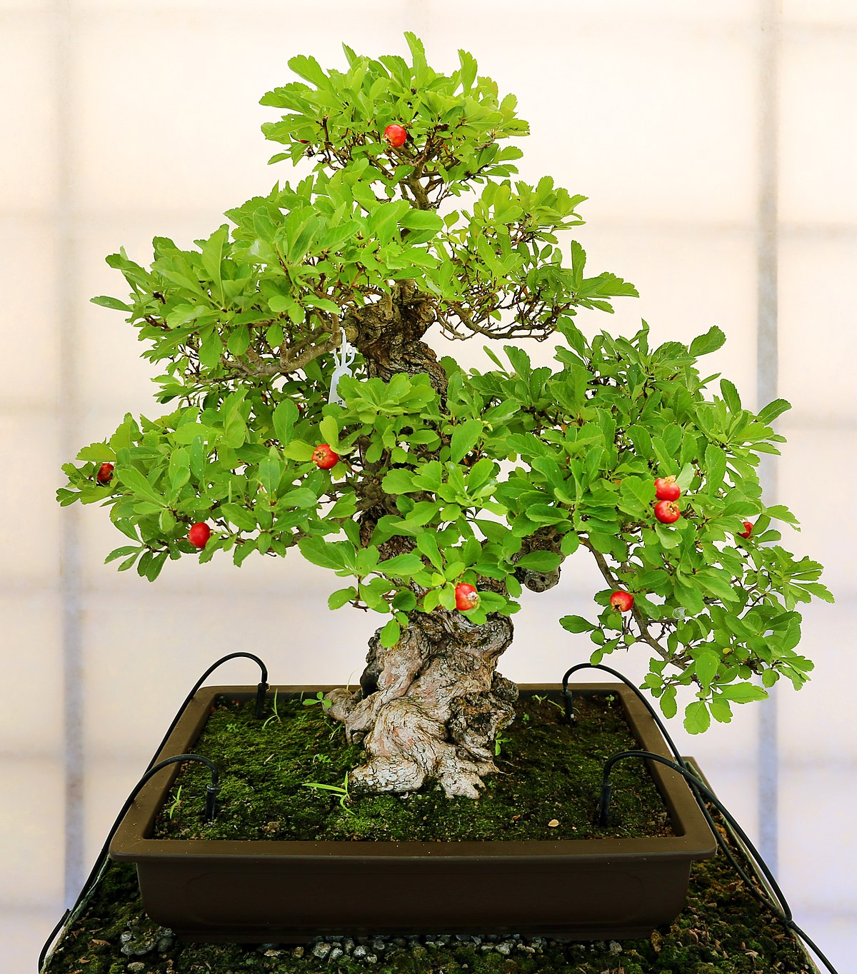 Strawberry Plant Ideas